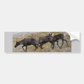 Caribou Trot Bumper Sticker