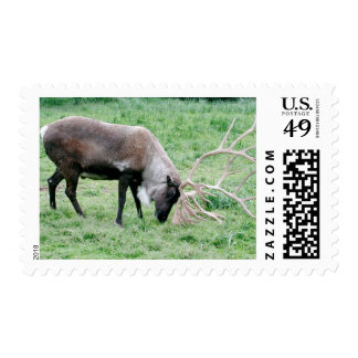 Caribou with Large Antlers Postage