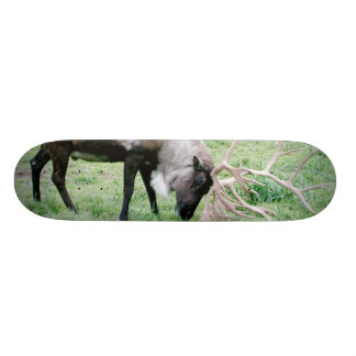 Caribou with Large Antlers Skateboard Decks