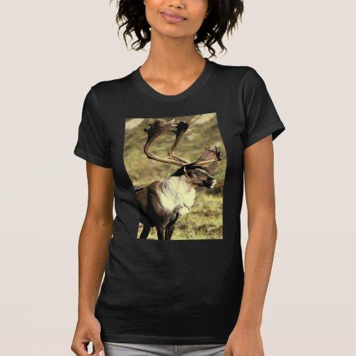 Caribú Camiseta