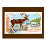 Caribú del vintage (reno) y Fox ártico Tarjetas Postales