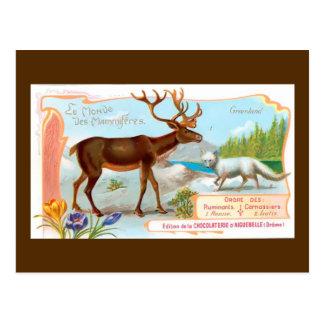 Caribú del vintage (reno) y Fox ártico Tarjeta Postal