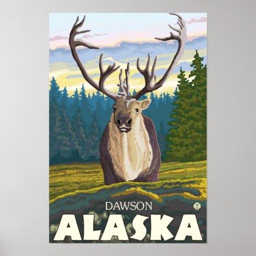 Caribú en el salvaje - Dawson, Alaska Posters