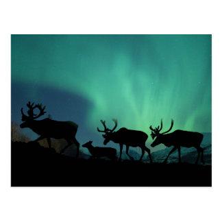 Caribú y aurora boreal tarjetas postales