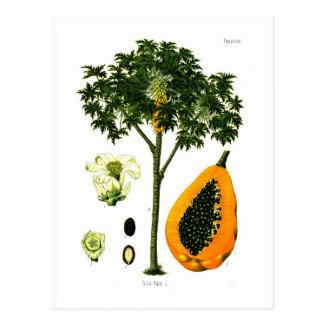 Carica papaya (papaya) postales