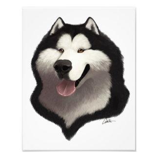 Caricatura del Malamute de Alaska Fotografías