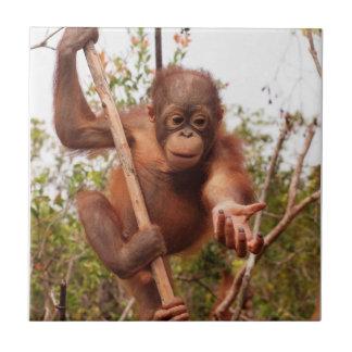 Caridad huérfana dulce del orangután azulejo cuadrado pequeño