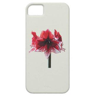 Carisma del Amaryllis iPhone 5 Coberturas