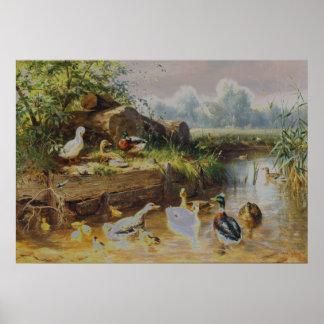 Carl Jutz - patos en el arroyo (modificado) Póster