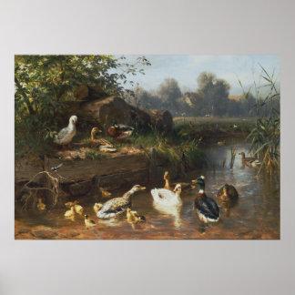 Carl Jutz - patos en el arroyo Posters