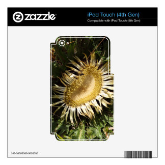 Carline thistle (Carlina acanthifolia) iPod Touch 4G Skin
