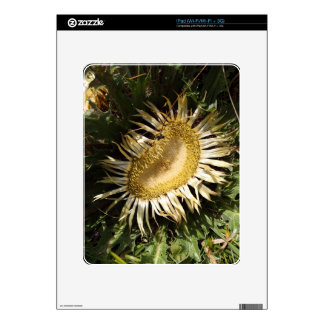 Carline thistle (Carlina acanthifolia) Skin For iPad