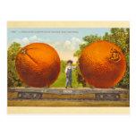 Carload of Mammoth Navel Oranges - vintage Postcard