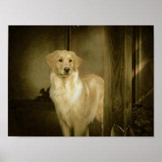 Carlotta Golden Retriever Waiting Poster