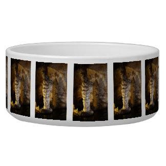 Carlsbad Caverns Bowl
