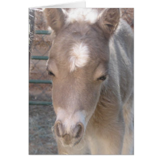 Carly filly card