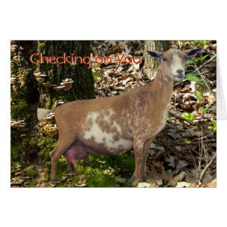 Carmel Mini Dairy Doe Goat- customize Card