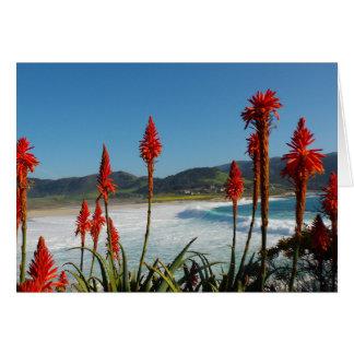 Carmel Point beach with Torch Aloe flowers Card