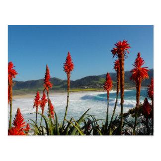 Carmel Point beach with Torch Aloe flowers Postcard