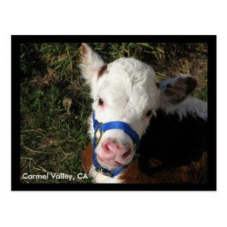 Carmel Valley, CA Postcard