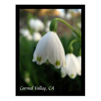 Carmel Valley Flowers Postcard