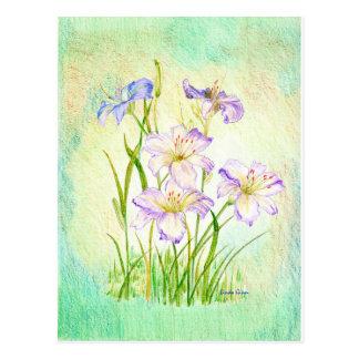 Carmen Renee Day Lilies Postcard