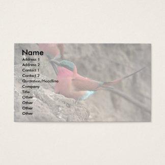 Carmine Bee-Eater Business Card