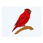 Carmine Cardinal Postcard