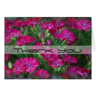 Carmine Dianthus Thank You Card