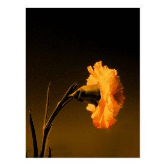 carnation 2 post cards