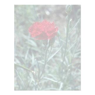 Carnation (Dianthus Caryophyllus) flowers Letterhead