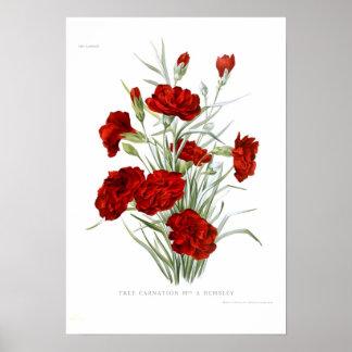 Carnation Poster