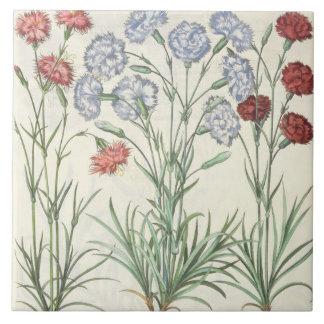Carnations: 1.Caryophyllus multiplex flore albo; 2 Tile