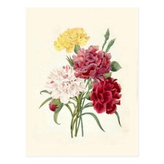 Carnations by Pierre-Joseph Redouté Postcard