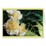 """""""Carnations"""" Greeting Cards"""
