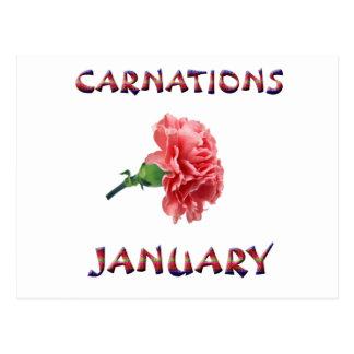 Carnations January Flower Postcard