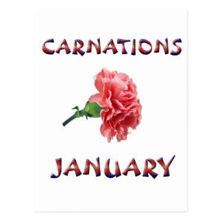 Carnations January Flower Postcards