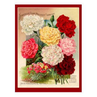 Carnations Vintage Seed Packet Art on Cards Postcard