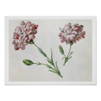 Carnations (w/c on paper) poster