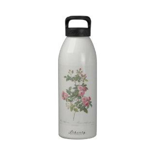 Carnea de 88 Rosa Multiflora por Redouté Botellas De Agua Reutilizables
