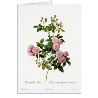 Carnea del multiflora de Rosa (zarza subió) Felicitacion