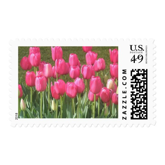 Carnival in Pink ~ Pink Tulip Garden Spring Photo Postage