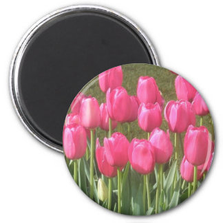 Carnival in Pink Tulips Magnet