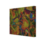 Carnivale Wrapped Canvas Gallery Wrapped Canvas