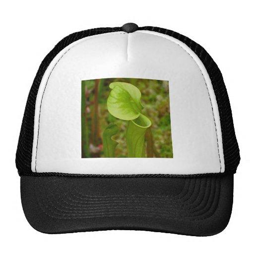 Carnivore Plant Trucker Hats