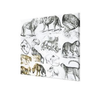Carnivorous Animals Canvas Prints