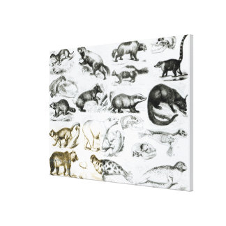 Carnivorous Animals Gallery Wrapped Canvas