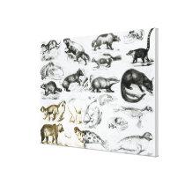 Carnivorous Animals Canvas Print