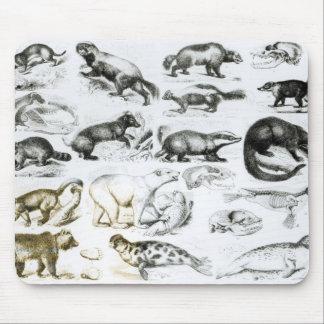 Carnivorous Animals Mousepads