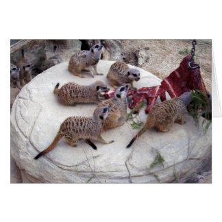 Carnivorous_Meerkats,_ Card